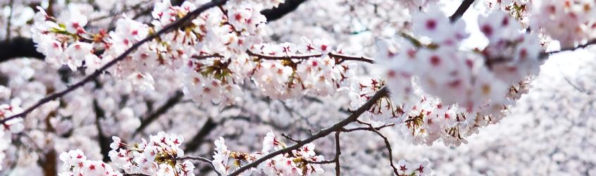 Spring Festivals in Korea