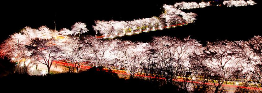 Jecheon Cherry Blossom Festival