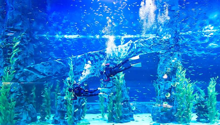 Lotte World Aquarium (Credit: Lotte World Aquarium)