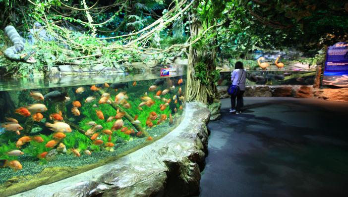 Busan - Meetings by the Sea - Sea Life Busan Aquarium